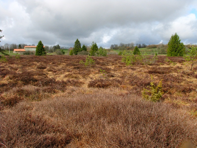 La Seigne des Barbouillons, une tourbière «réserve naturelle»
