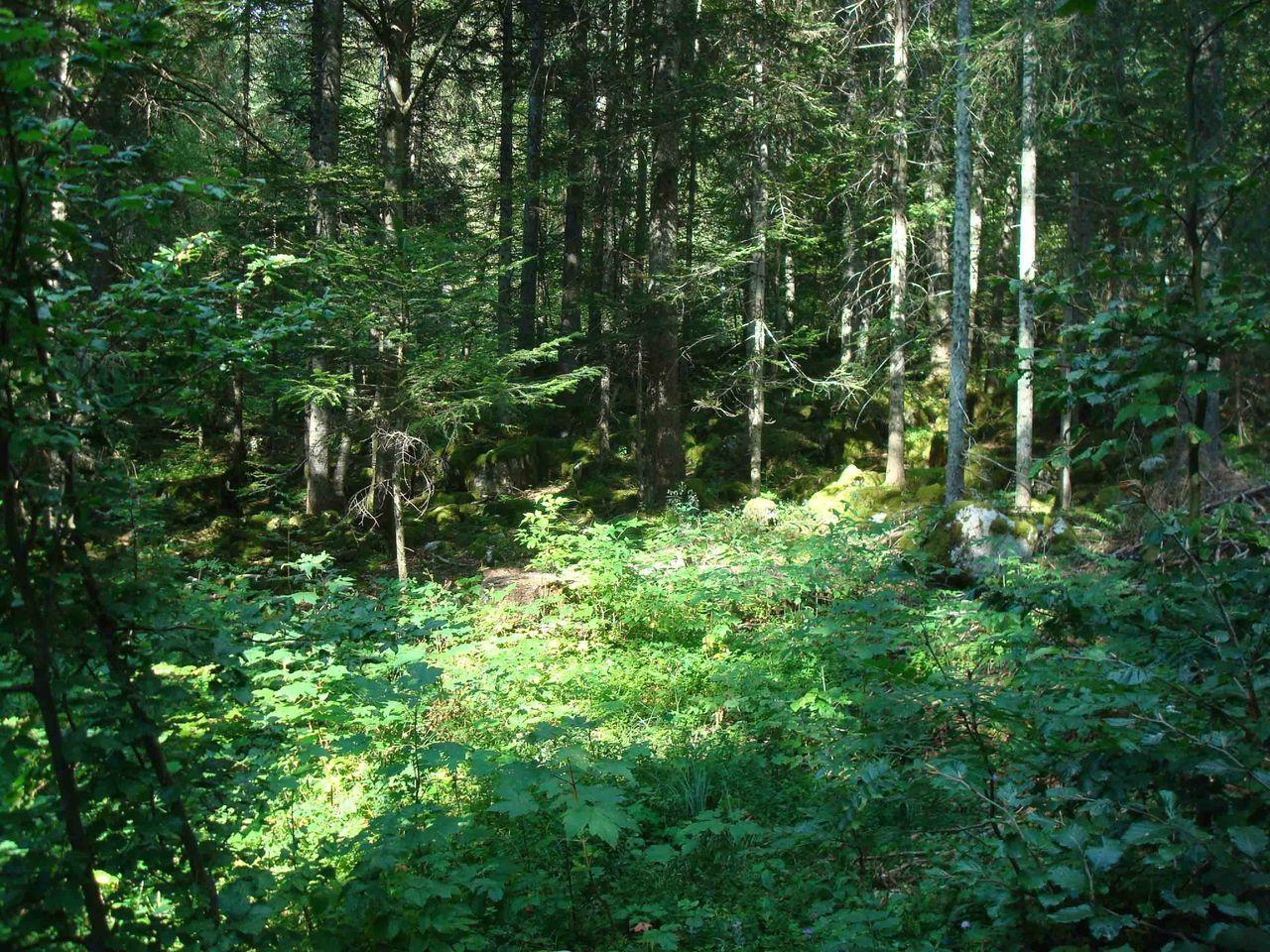 Forêt communale : 1000 ha à exploiter et à préserver