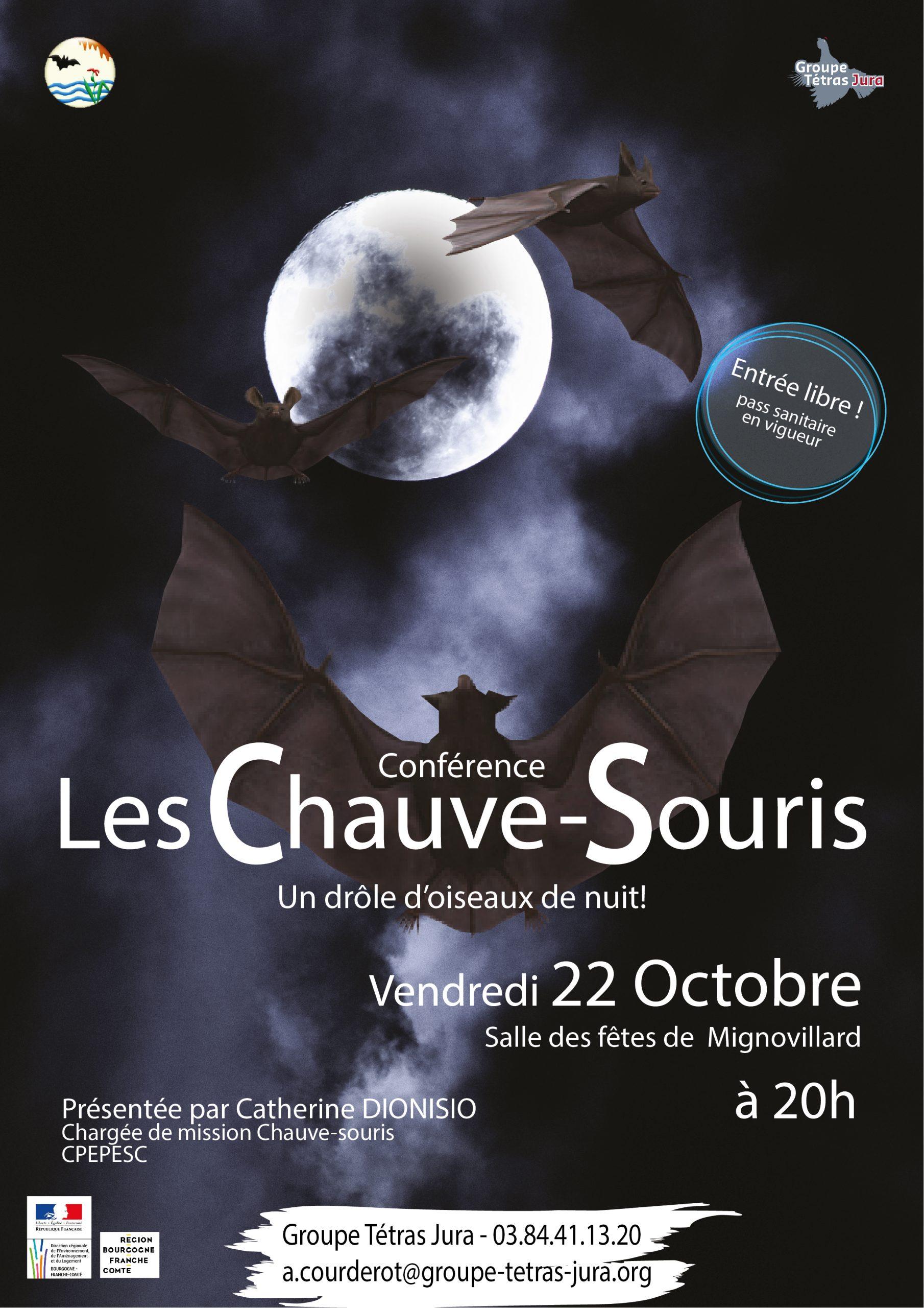 Les Chauve-souris, Un Drôle D'oiseau De Nuit : Conférence Le 22 Octobre 2021